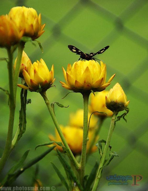 -زهور-2 صور ورد, تحميل اكثر من 100 صور ورود جميلة, صور ورد رائعة 2018