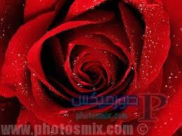 حب وقلوب مجروحة 2