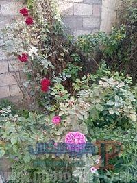1506609568 4120 200px Gardens 4