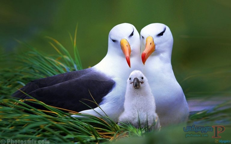 -اجمل-خلفيات-طيور-جارح-1 صور حمام وطيور جميلة , اجمل خلفيات طيور جميلة بالوان غريبة