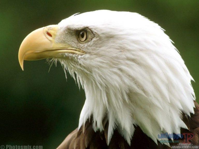 -اجمل-خلفيات-ورمزيات-طيور-2 صور حمام وطيور جميلة , اجمل خلفيات طيور جميلة بالوان غريبة