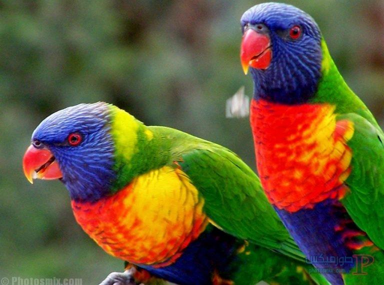-صور-نادرة-للطيور-والوانها-الغريبة-15 صور حمام وطيور جميلة , اجمل خلفيات طيور جميلة بالوان غريبة