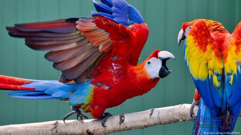 طيور جميلة بالوان غريبة 1
