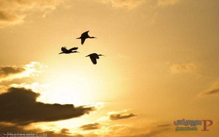 -طيور-جميلة-بالوان-غريبة-6 صور حمام وطيور جميلة , اجمل خلفيات طيور جميلة بالوان غريبة
