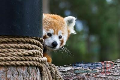 -صور-حيوانات-مضحكة-5 تحميل صور حيوانات مضحكة، صور حيوانات مضحكة جدا 2018