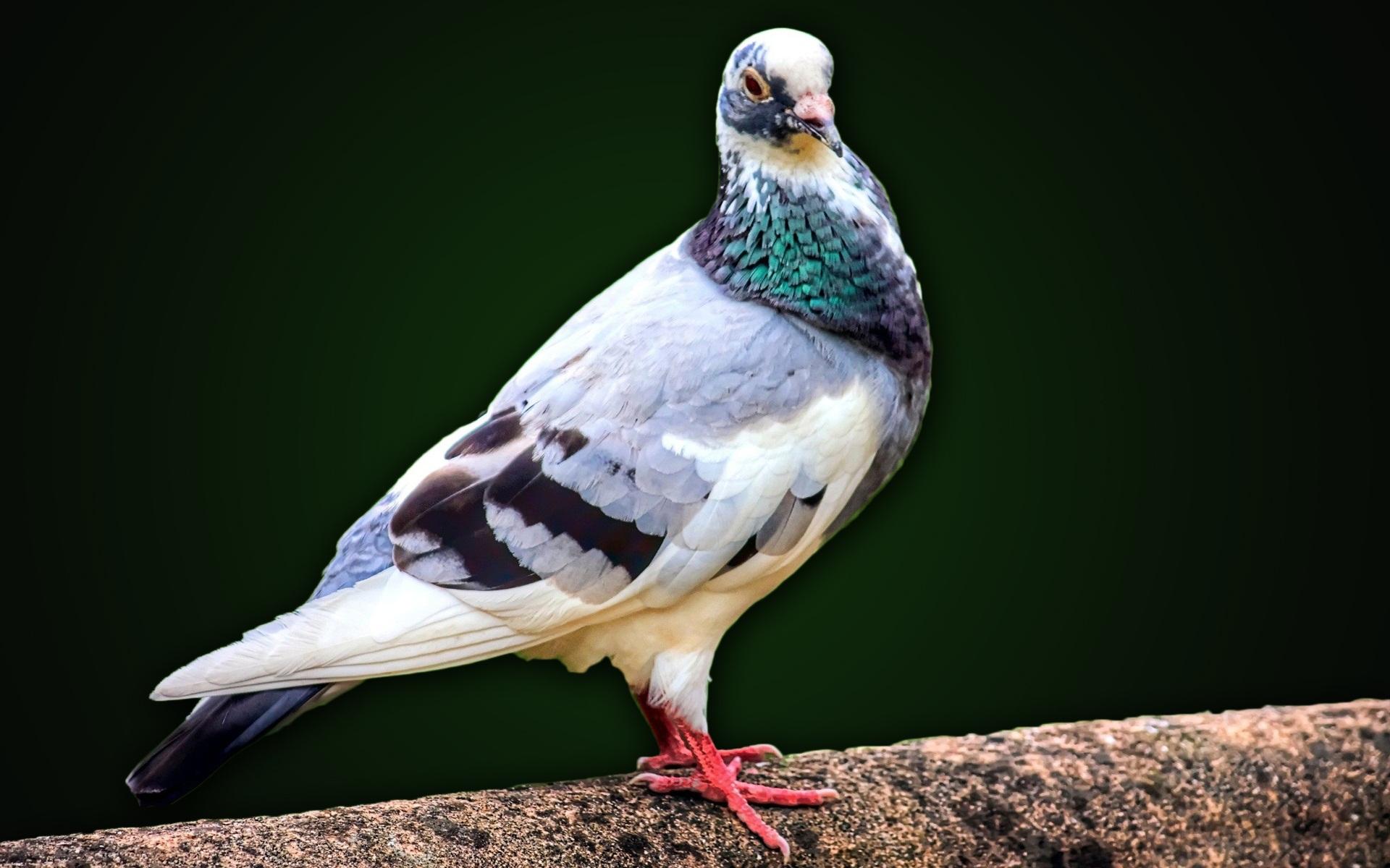 اجمل خلفيات طيور جميلة 1