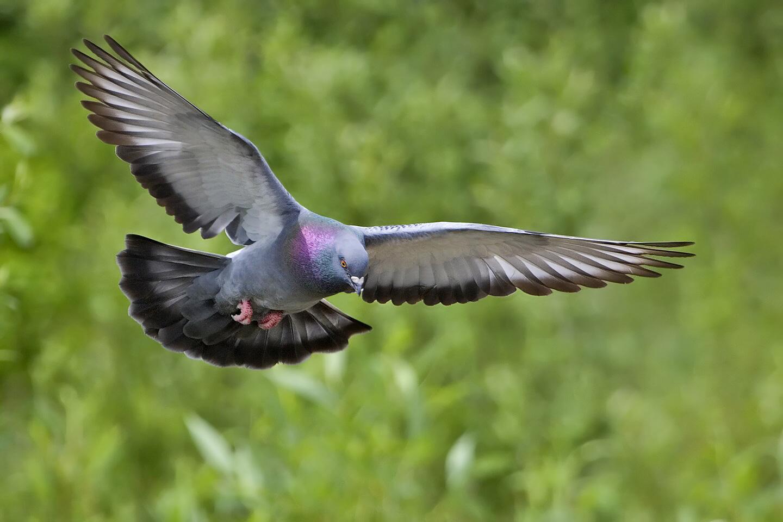 اجمل خلفيات طيور جميلة 10