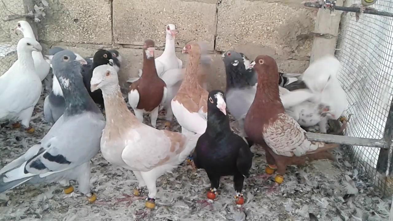 اجمل خلفيات طيور جميلة 14