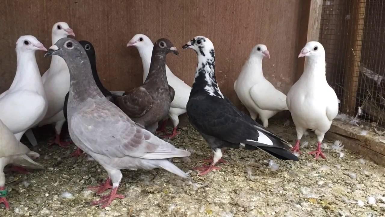 اجمل خلفيات طيور جميلة 15