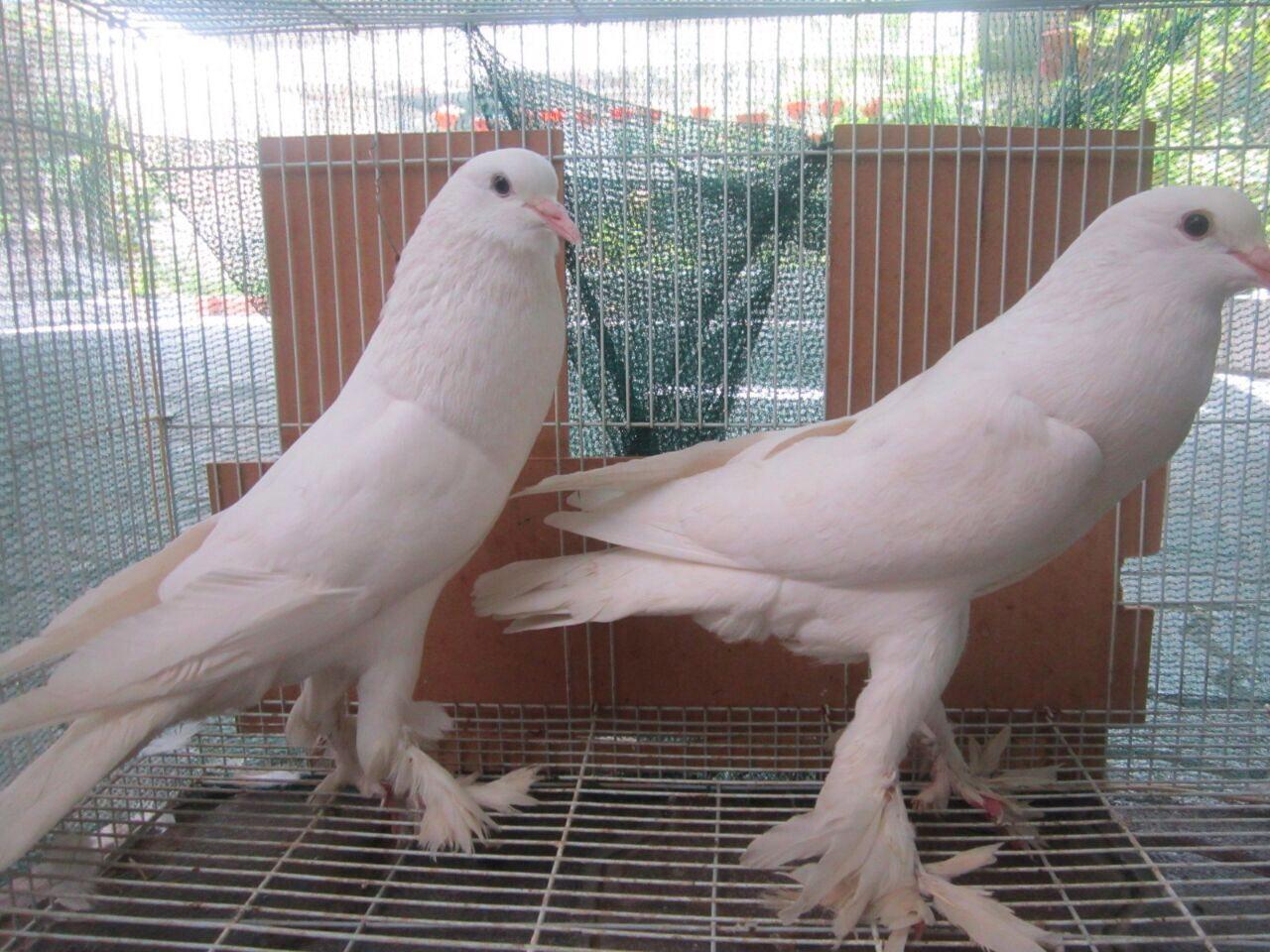 اجمل خلفيات طيور جميلة 17