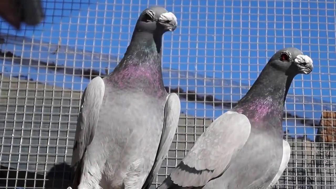 اجمل خلفيات طيور جميلة 20