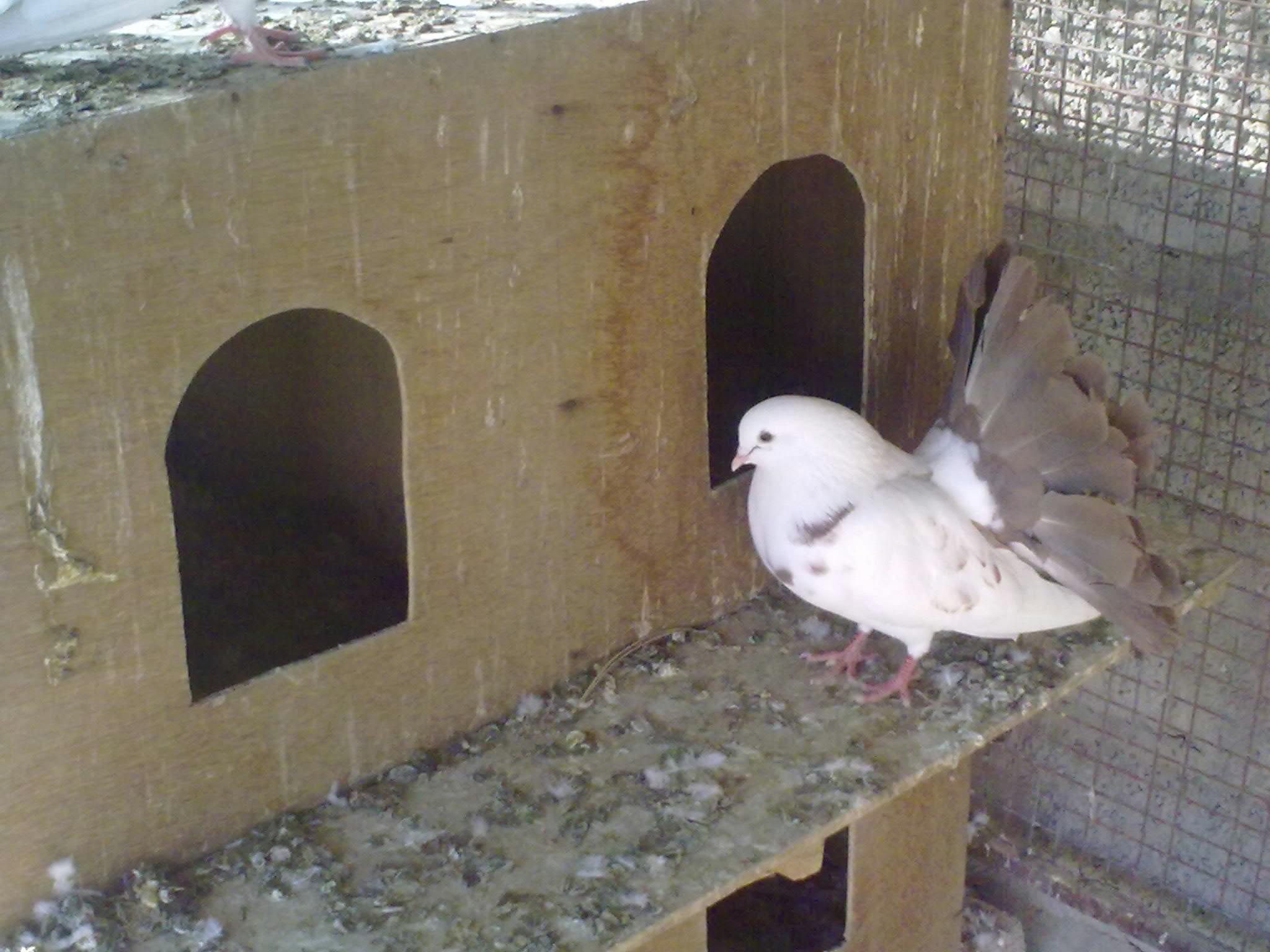 اجمل خلفيات طيور جميلة 3