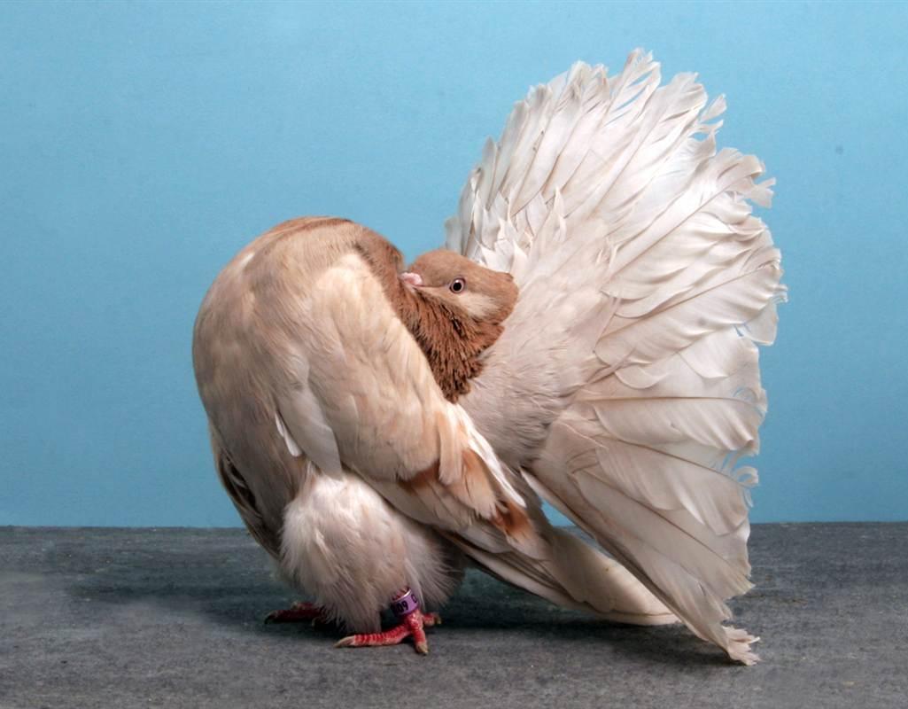 اجمل خلفيات طيور جميلة 5