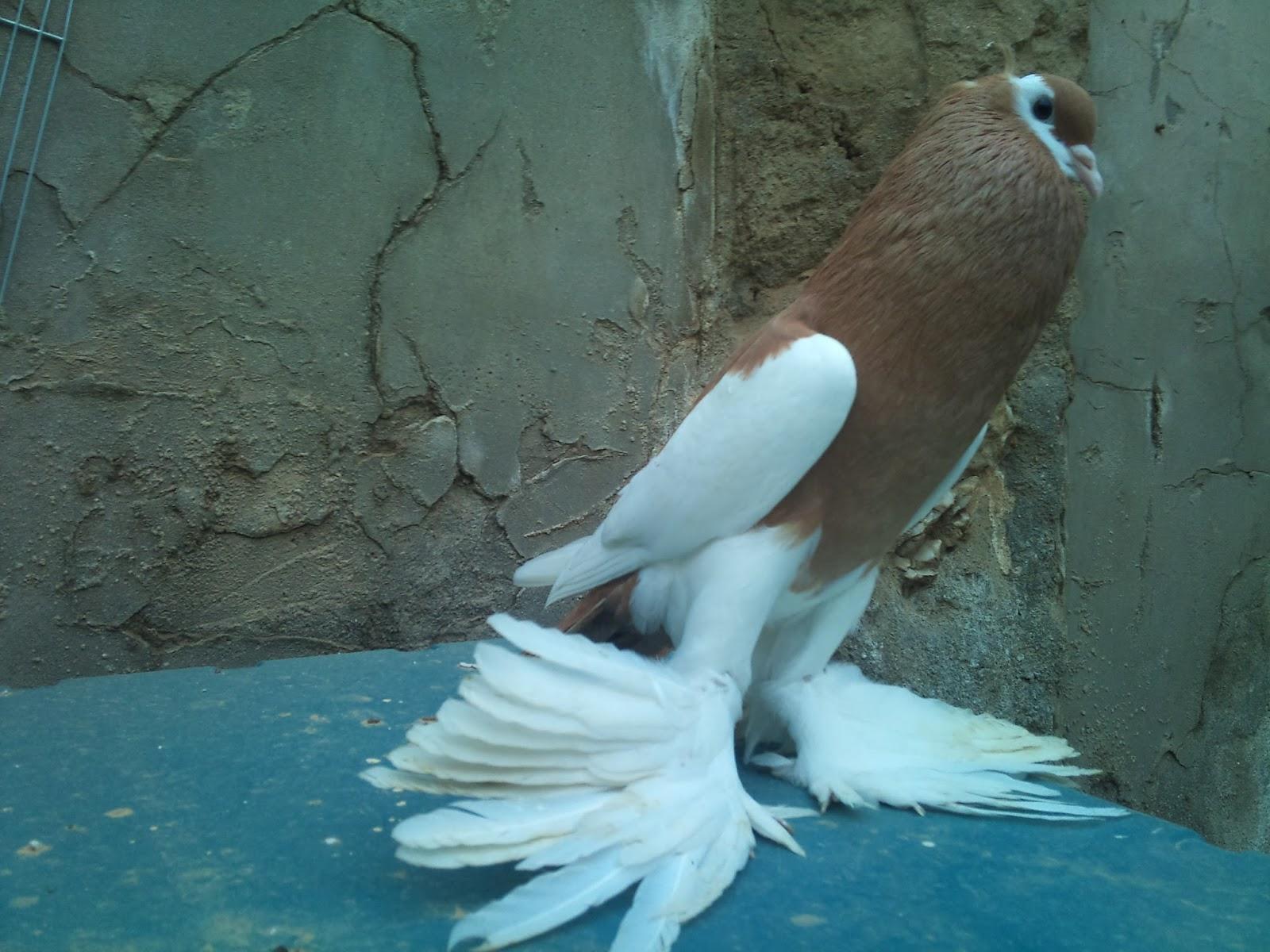 اجمل خلفيات طيور جميلة 7
