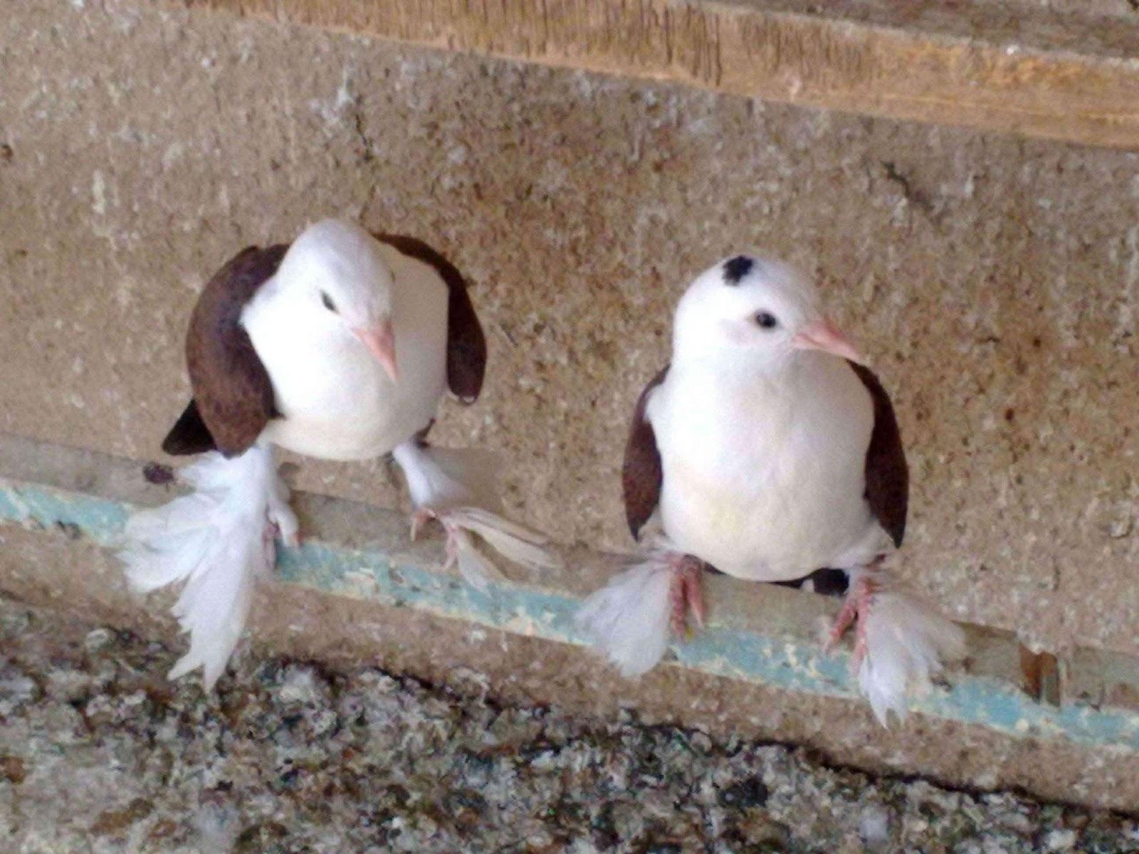 اجمل خلفيات طيور جميلة 8