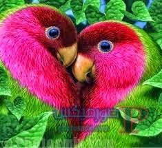 جميلة لطائران علي شكل قلب