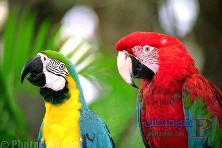 -حلوة-للطيور صور جميلة, صور جميلة مكتوب عليها, اكثر من 100 صورة رائعة