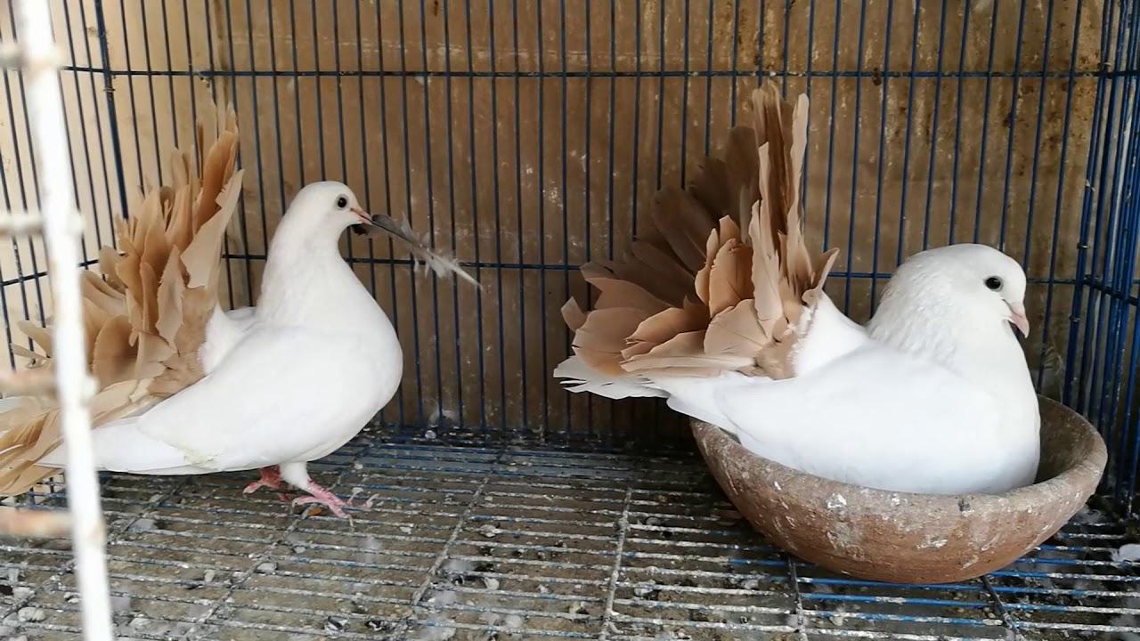 صور حمام طيور جميلة اجمل خلفيات طيور جارحة طيور جميلة 1