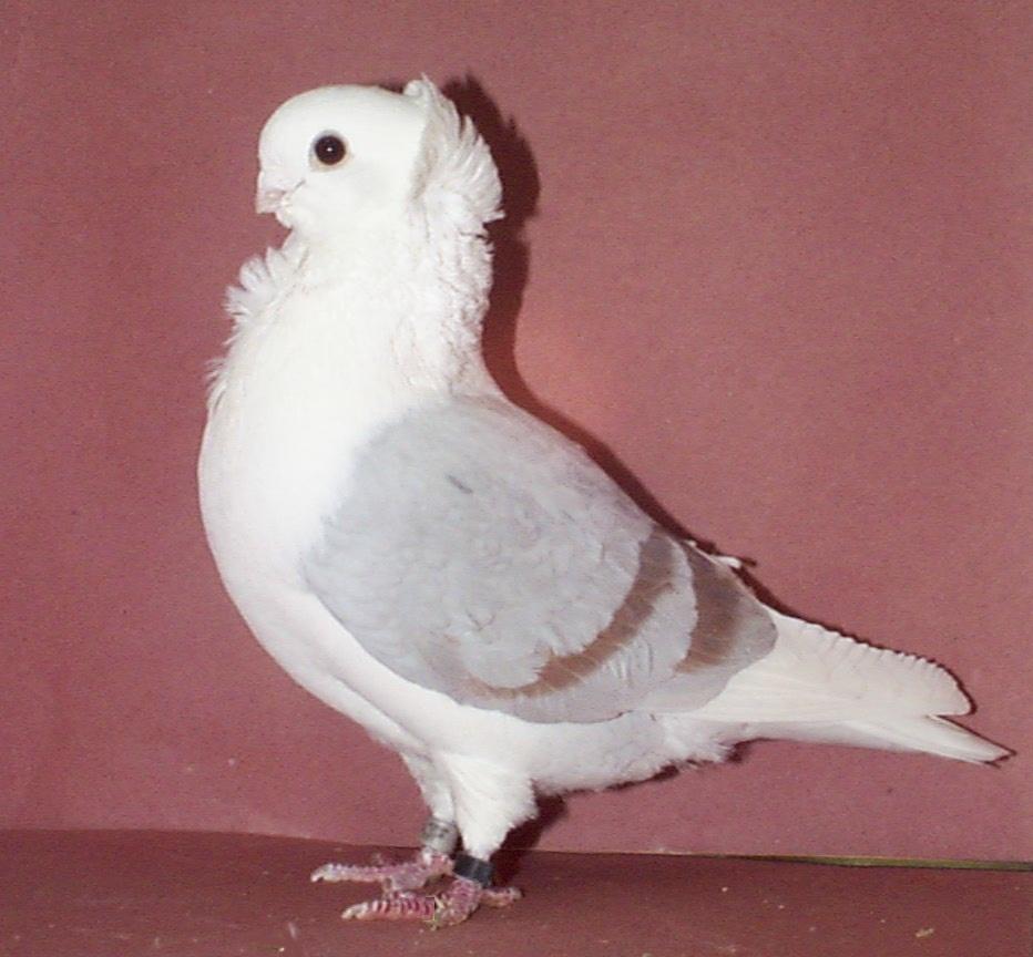 صور حمام طيور جميلة اجمل خلفيات طيور جارحة طيور جميلة 13