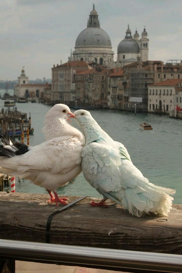 صور حمام طيور جميلة اجمل خلفيات طيور جارحة طيور جميلة 14
