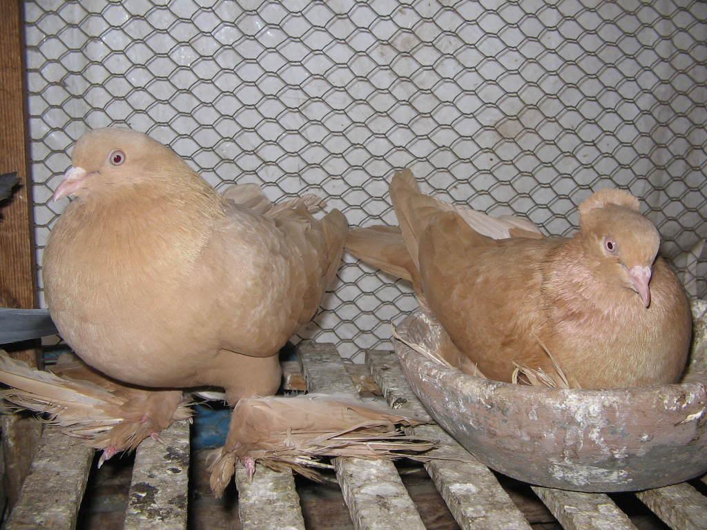 صور حمام طيور جميلة اجمل خلفيات طيور جارحة طيور جميلة 15