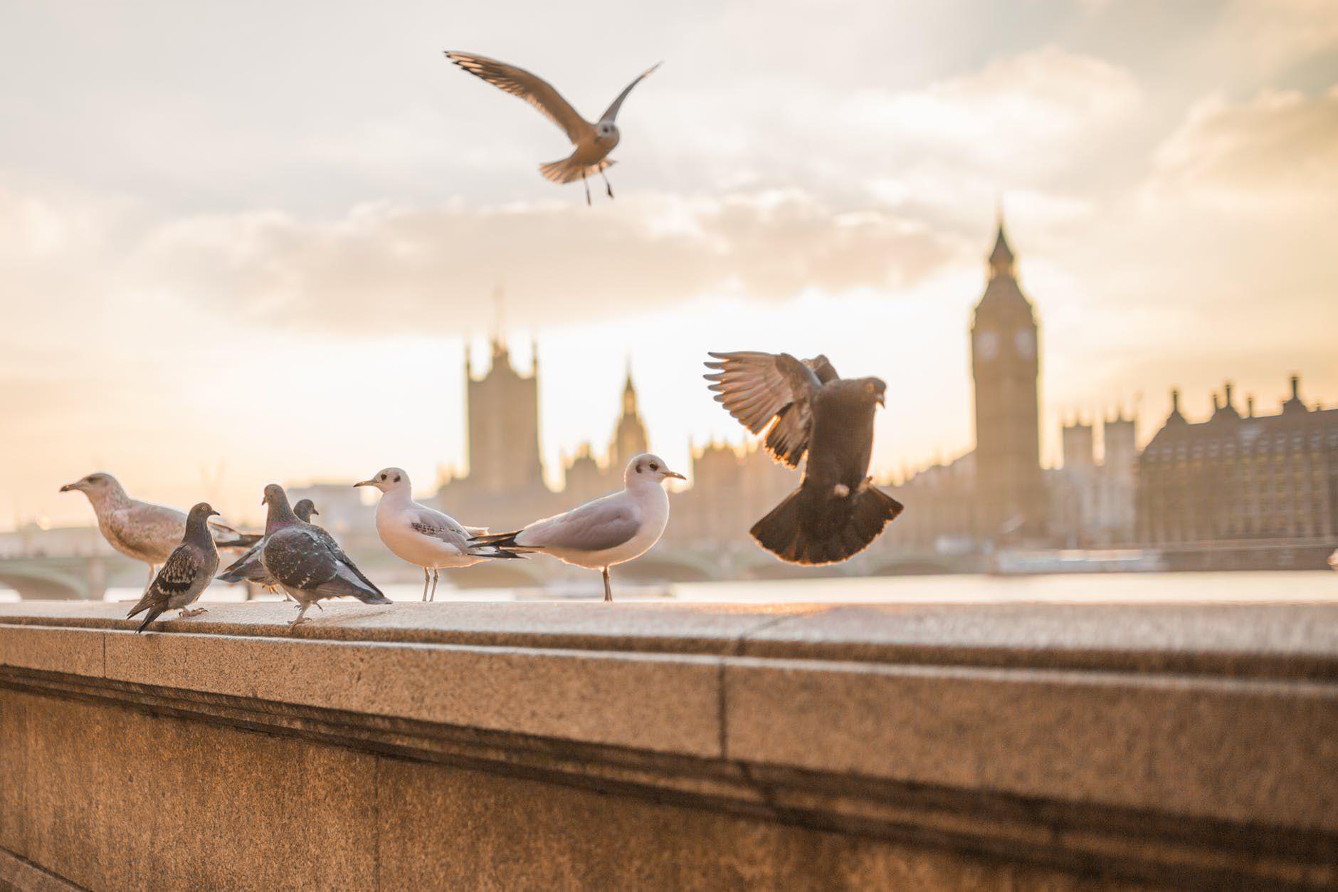 صور حمام طيور جميلة اجمل خلفيات طيور جارحة طيور جميلة 2