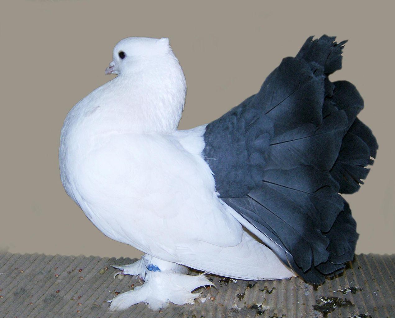 صور حمام طيور جميلة اجمل خلفيات طيور جارحة طيور جميلة 20