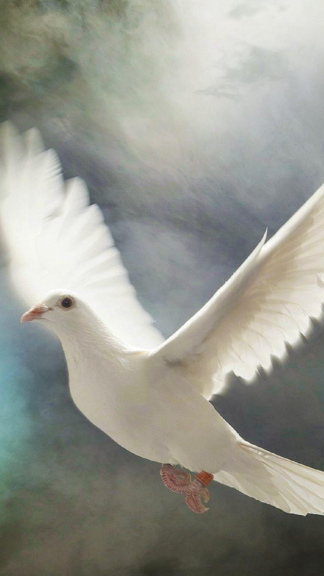 صور حمام طيور جميلة اجمل خلفيات طيور جارحة طيور جميلة 21
