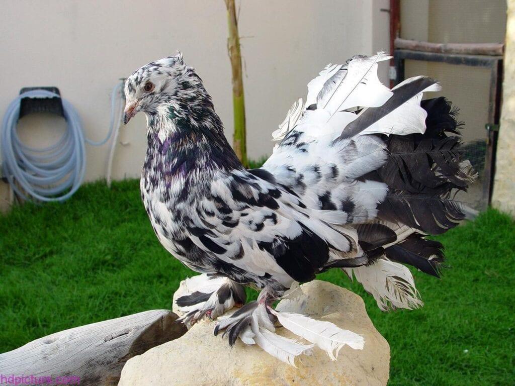 صور حمام طيور جميلة اجمل خلفيات طيور جارحة طيور جميلة 22