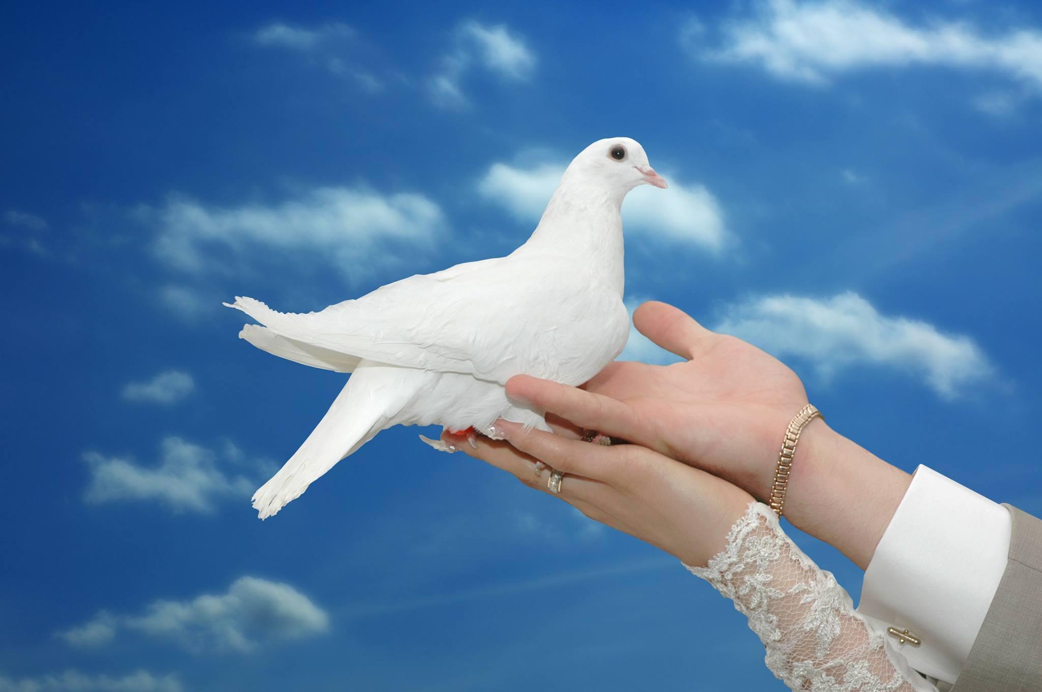 صور حمام طيور جميلة اجمل خلفيات طيور جارحة طيور جميلة 24