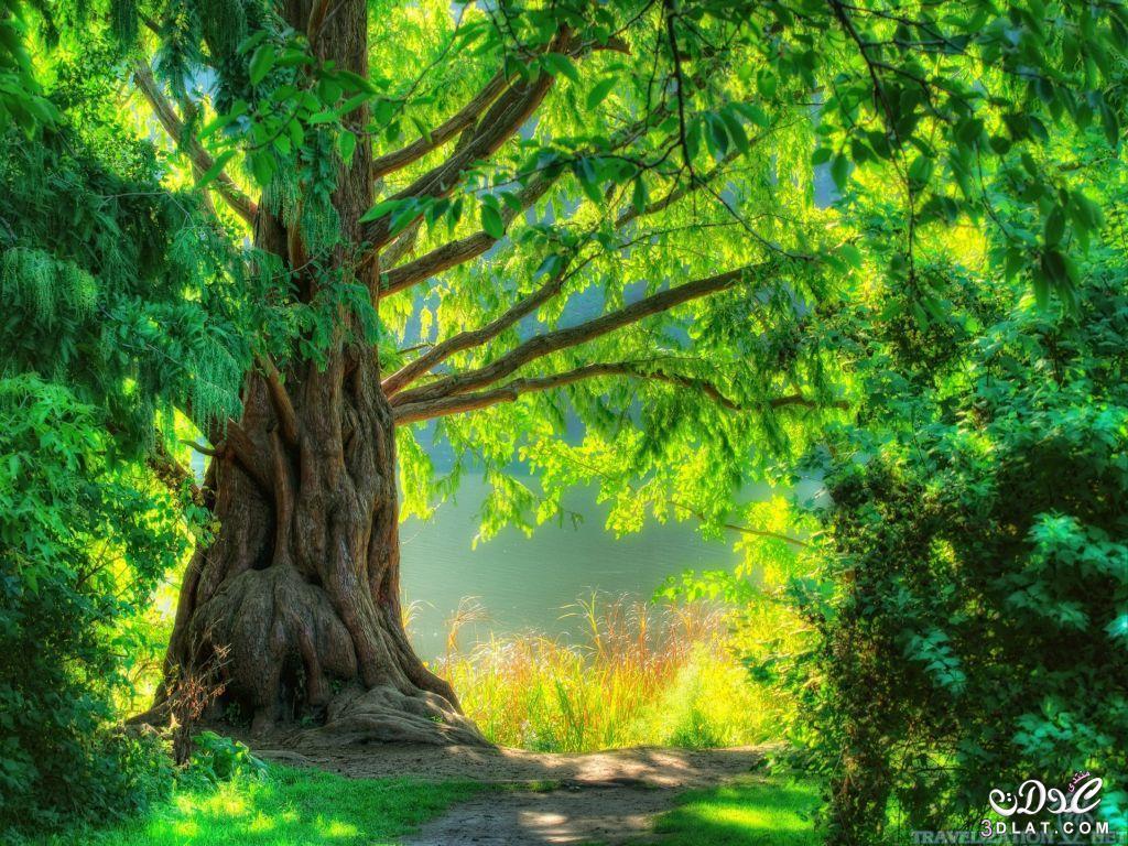 صور طبيعية خلابة صور خلفيات طبيعة 11