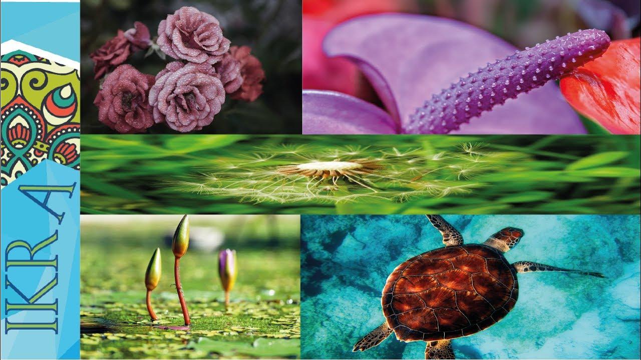 صور طبيعية خلابة صور خلفيات طبيعة 21