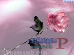 أجمل صور شوق ومحبة للاحباب 11