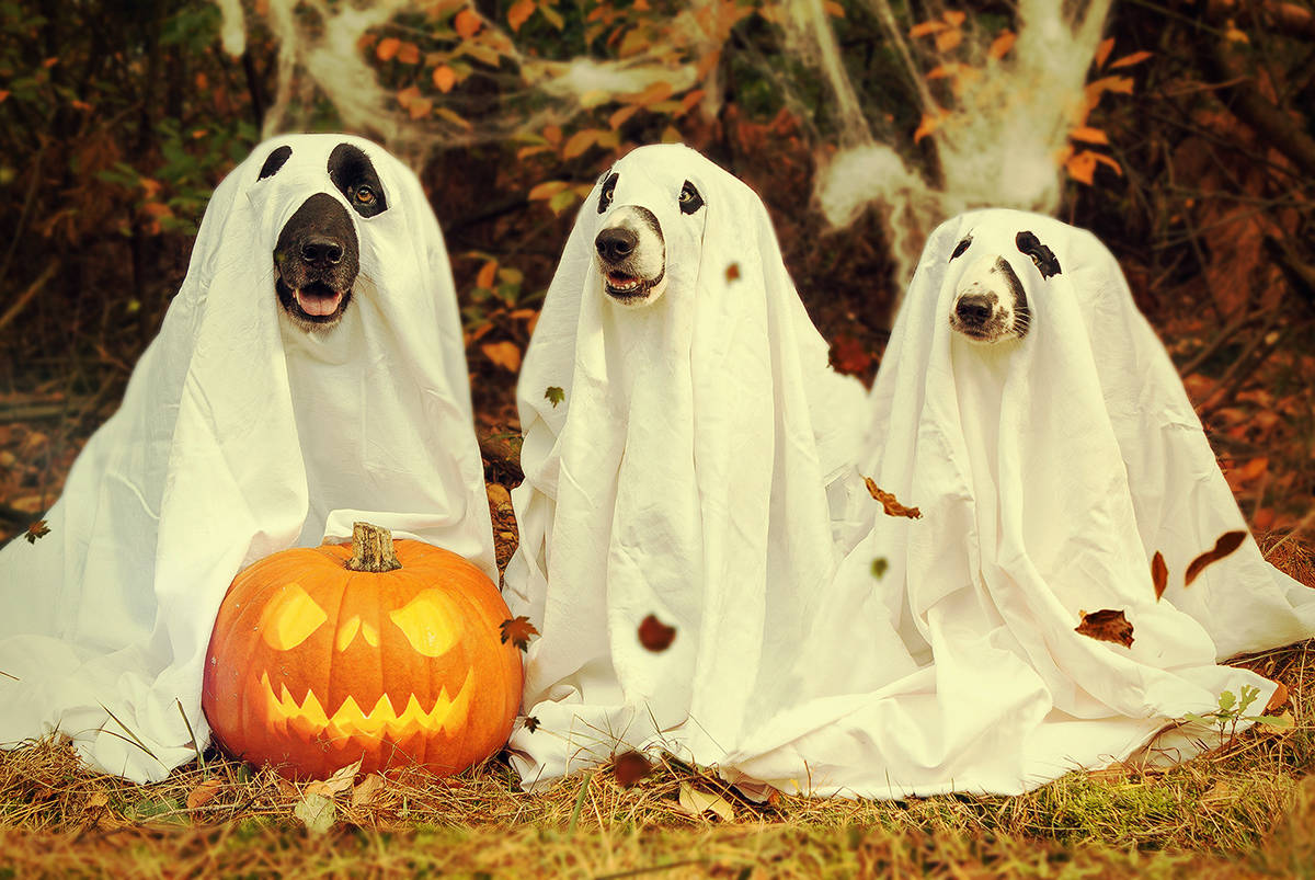 اجمل صور هالوين 12