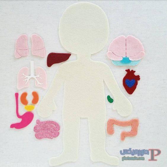 تعليم الاطفال اجزاء الجسم بالكرتون 2