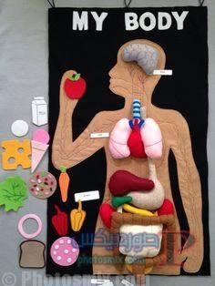 تعليم الاطفال اجزاء الجسم بالكرتون 5