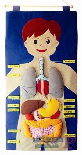 تعليم الاطفال اجزاء الجسم بالكرتون 8