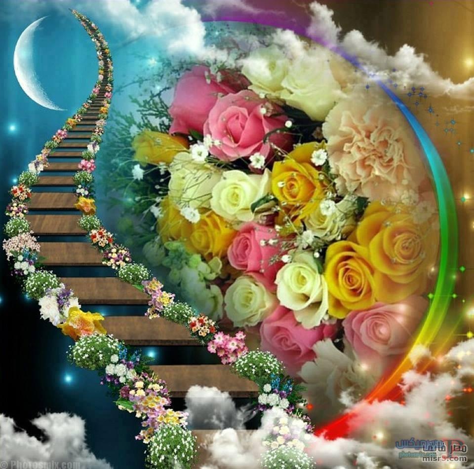 رائعة عن الورود 7