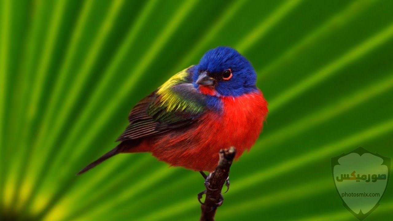 اجمل الصور عصافيرخلفيات عصافير ملونةخلفيات عصافير متحركةاجمل الصور العصافير الكناري 10