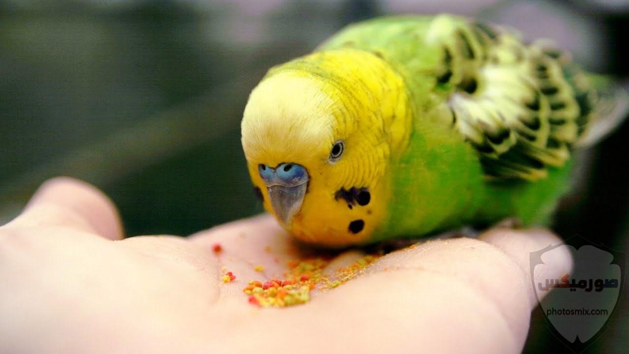 اجمل الصور عصافيرخلفيات عصافير ملونةخلفيات عصافير متحركةاجمل الصور العصافير الكناري 11