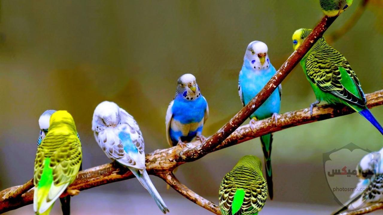 اجمل الصور عصافيرخلفيات عصافير ملونةخلفيات عصافير متحركةاجمل الصور العصافير الكناري 2