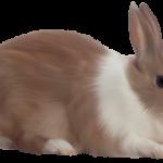 -ارانب-2019-معلومات-كاملة-عن-الأرانب-صور-ميكس-1-150x150 صور ارانب 2019 معلومات كاملة عن الأرانب