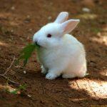 -ارانب-2019-معلومات-كاملة-عن-الأرانب-صور-ميكس-10-150x150 صور ارانب 2019 معلومات كاملة عن الأرانب