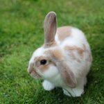 -ارانب-2019-معلومات-كاملة-عن-الأرانب-صور-ميكس-12-150x150 صور ارانب 2019 معلومات كاملة عن الأرانب