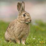 -ارانب-2019-معلومات-كاملة-عن-الأرانب-صور-ميكس-14-150x150 صور ارانب 2019 معلومات كاملة عن الأرانب