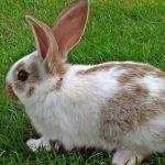 -ارانب-2019-معلومات-كاملة-عن-الأرانب-صور-ميكس-15-150x150 صور ارانب 2019 معلومات كاملة عن الأرانب