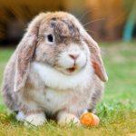 -ارانب-2019-معلومات-كاملة-عن-الأرانب-صور-ميكس-16-150x150 صور ارانب 2019 معلومات كاملة عن الأرانب