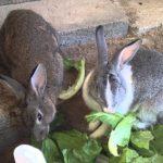 -ارانب-2019-معلومات-كاملة-عن-الأرانب-صور-ميكس-17-150x150 صور ارانب 2019 معلومات كاملة عن الأرانب