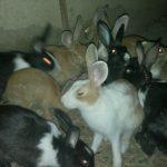 -ارانب-2019-معلومات-كاملة-عن-الأرانب-صور-ميكس-18-150x150 صور ارانب 2019 معلومات كاملة عن الأرانب