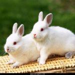 -ارانب-2019-معلومات-كاملة-عن-الأرانب-صور-ميكس-19-150x150 صور ارانب 2019 معلومات كاملة عن الأرانب